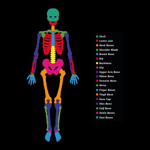 Skeleton Playground Marking